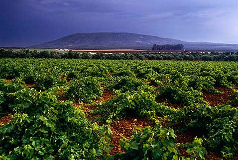 Регион виноделия Малага и Сьеррас де Малага - Vineyard at Mollina, near Antequera, Andalucia, Spain. [DO Malaga]