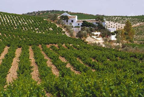 Регион виноделия Монтилья-Морилес - Vineyards and typical white farmhouse, near Montilla, Andalucía, Spain. [Montilla-Moriles]