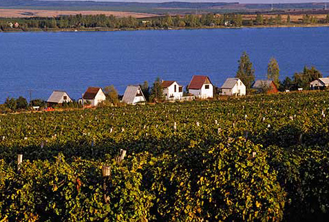 Регионы виноделия Венгрии - Vineyards by lake at Markaz, east of Gyцngyцs, Hungary. [Mбtraalja District]