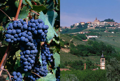 Регион виноделия Пьемонт -  Dolcetto grapes. Piemonte, Italy | The church tower at Valle Talloria d'Alba below the hilltop town of Diano d'Alba, Piemonte, Italy