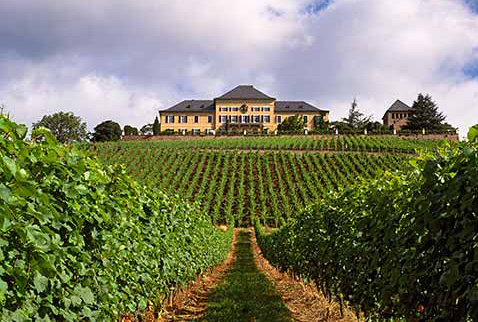 Регионы виноделия Германии - Schloss Johannisberg above its vineyard, Johannisberg, Germany. [Rheingau]