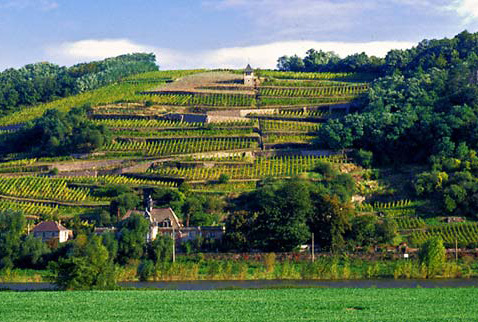 Регионы виноделия Германии, Саксония  - Vineyards by the Elbe river, south east of Meissen, Germany. [Sachsen / Saxony]