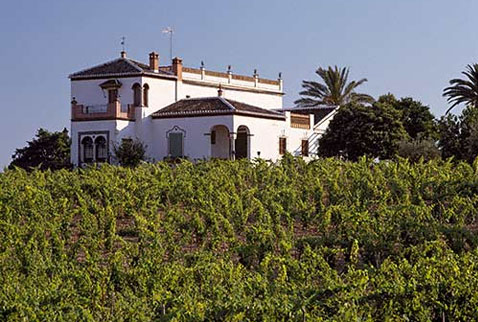 Регион виноделия Андалусия - Wine estate at Bollullos par del Condado, Huelva Province, Andalucía, Spain