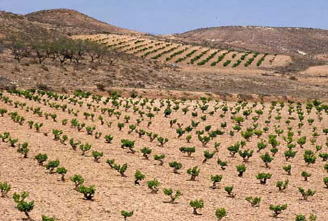 Регион виноделия Д.О. Кампо де Борха - Vineyards in the arid landscape near Fuendejalon, Aragon, Spain. [DO Campo de Borja]