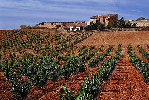 Регион виноделия Д.О. Кариньена - Vineyard and ruined farmhouse near Carinena, Aragon, Spain. [DO Carinena]