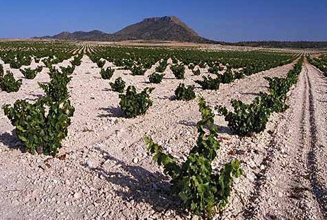 Регион виноделия Мурсия - Vineyard near Jumilla with the Sierra de las Cabras beyond. Murcia Province, Spain. [DO Jumilla]
